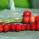 Metsmaasikad kõrrel ja Marjamäng