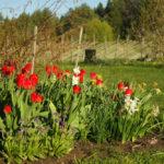 Pildituur kevadises aias