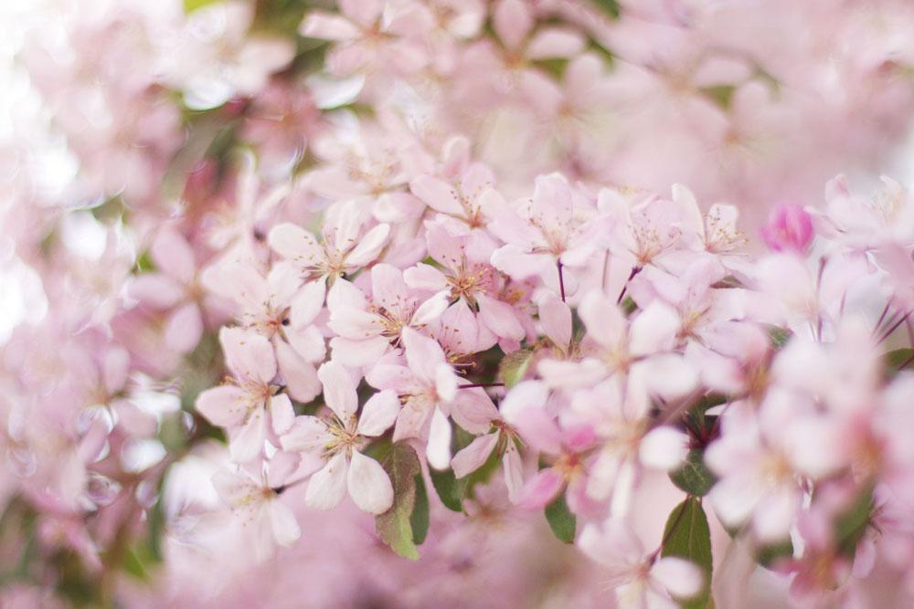 pinkpink