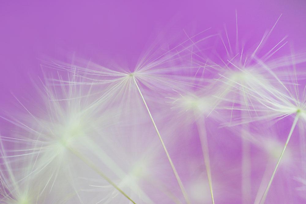 violetdandelions