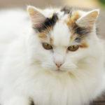 Fotoblogi – Perepildid ilusa valge kassiga
