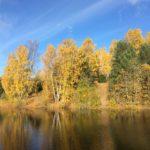 Puude ja põõsaste jaht Harku metsas