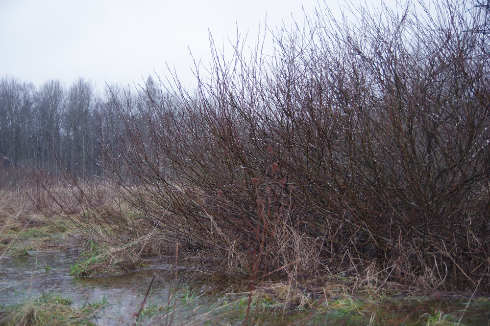 Merimetsa mets