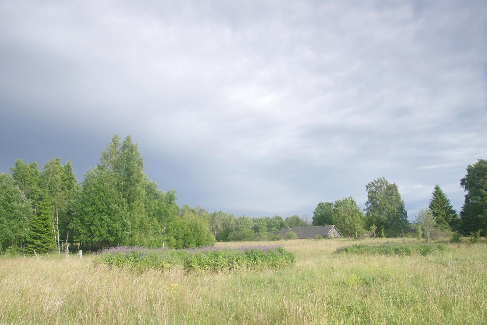 Ojaküla