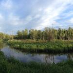 Mida ma Pääsküla rabast leidsin ehk Pääsküla jõgi