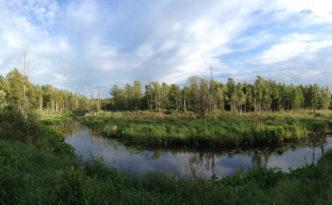pääsküla jõgi