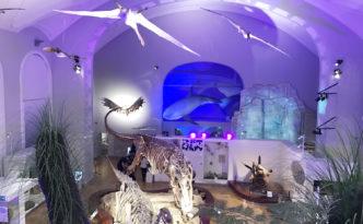 helsinki loodusmuuseum Luomus