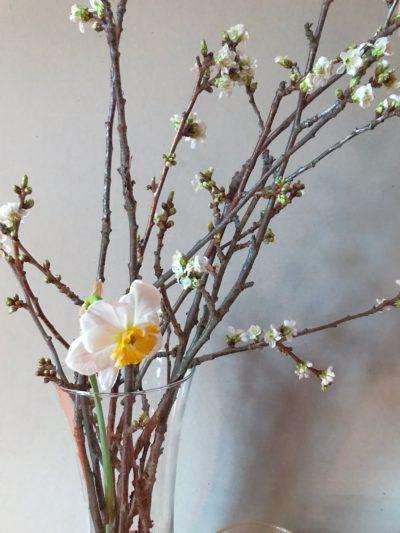 loodusalased katsed koos lastega, ajatamine, kirsioksad