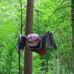 Lastega Lätti – Tērvete looduspark