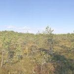 Kõrvemaa metsades ja rabades