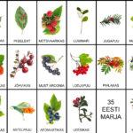 Eesti marjad – 40 pildikaarti