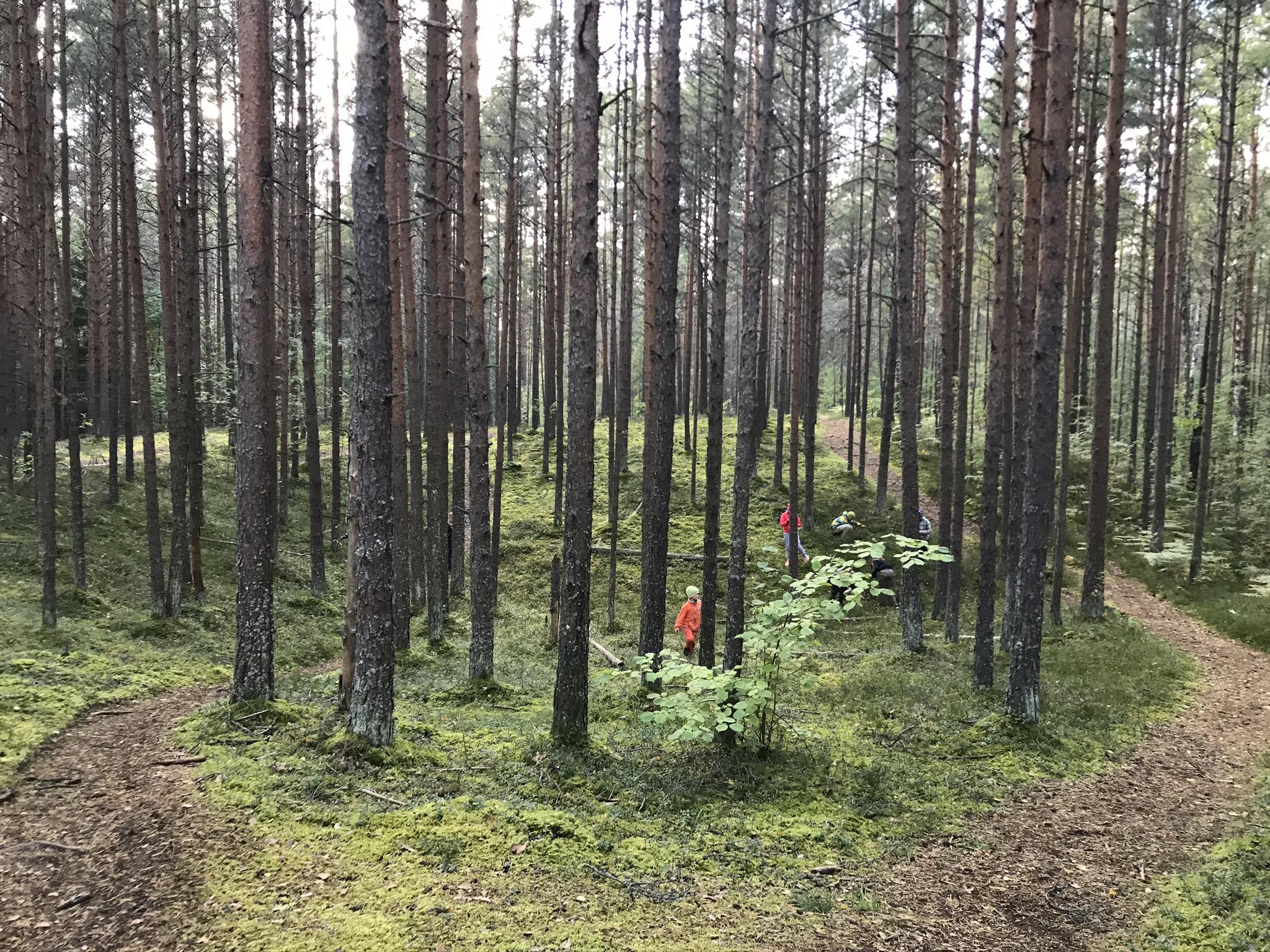 õuesünnipäev Harku metsas