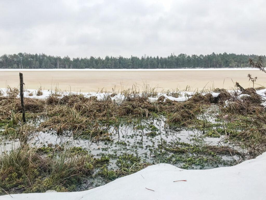 Kõnnu järv Seli raba